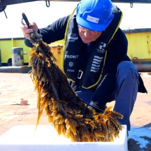 Zeewier verbouwen voor wereldgezondheidsdag